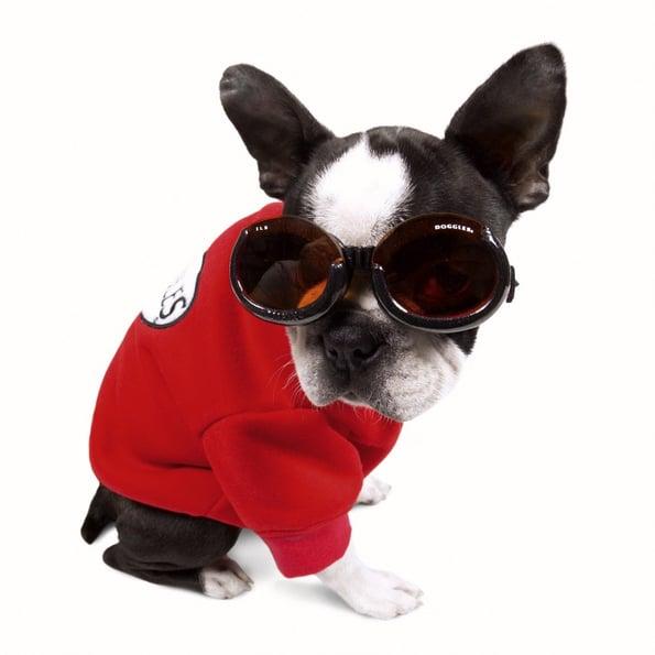Actualiza web, www.doggles.com