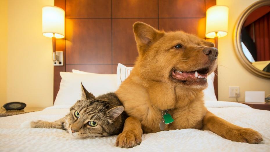 Actualiza Web, Servicios para mascotas